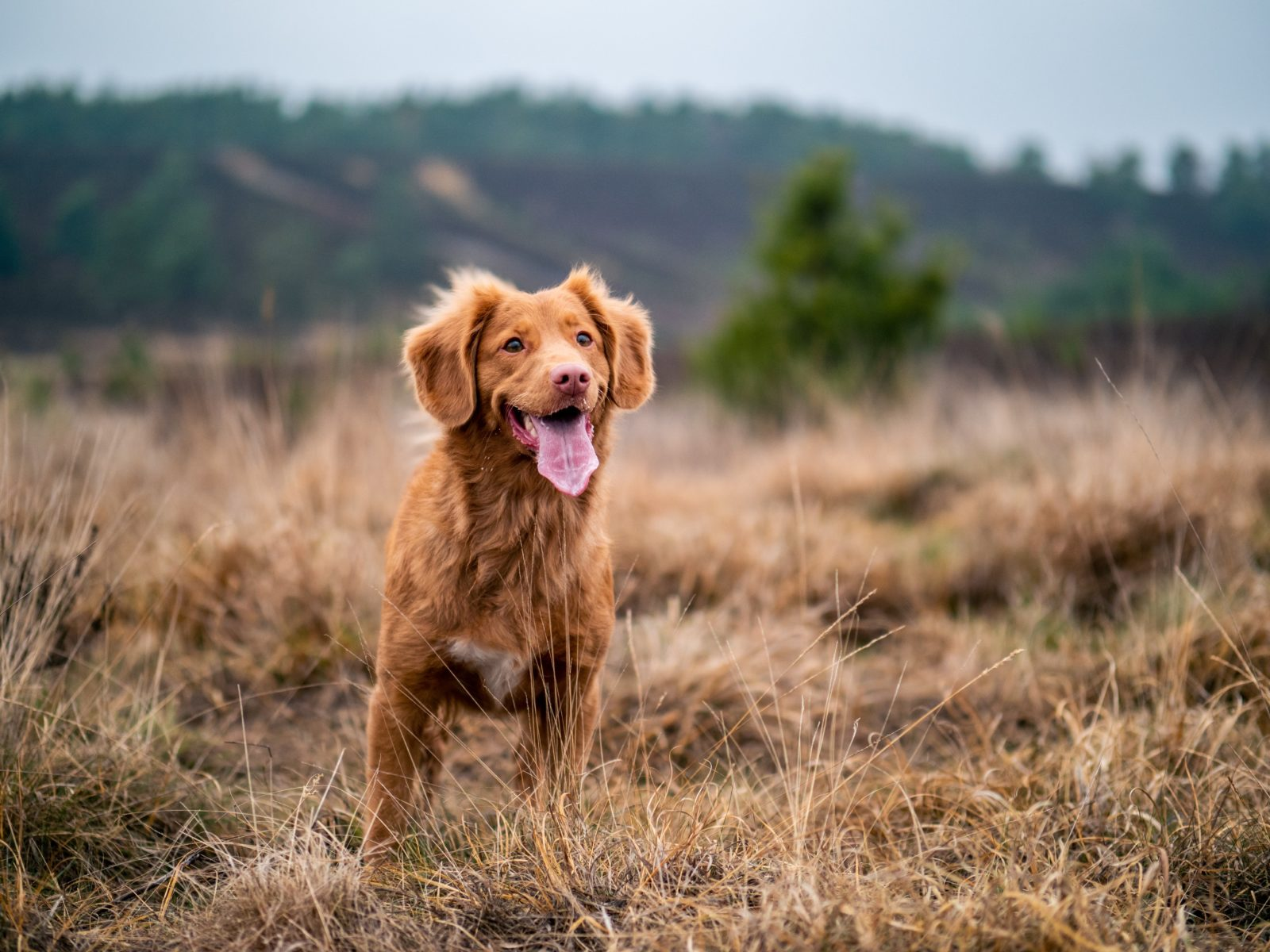 Elevate your pet photography with these 7 tried and tested tips
